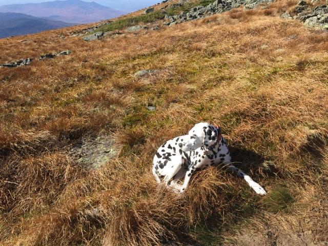 Mizpah chillin in the alpine meadow