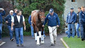 American Pharoah surrounded by his team arriving to Ashford Stud to his stall which was last used by a horse named Grand Slam, ha